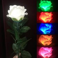 Five Color Light Rose